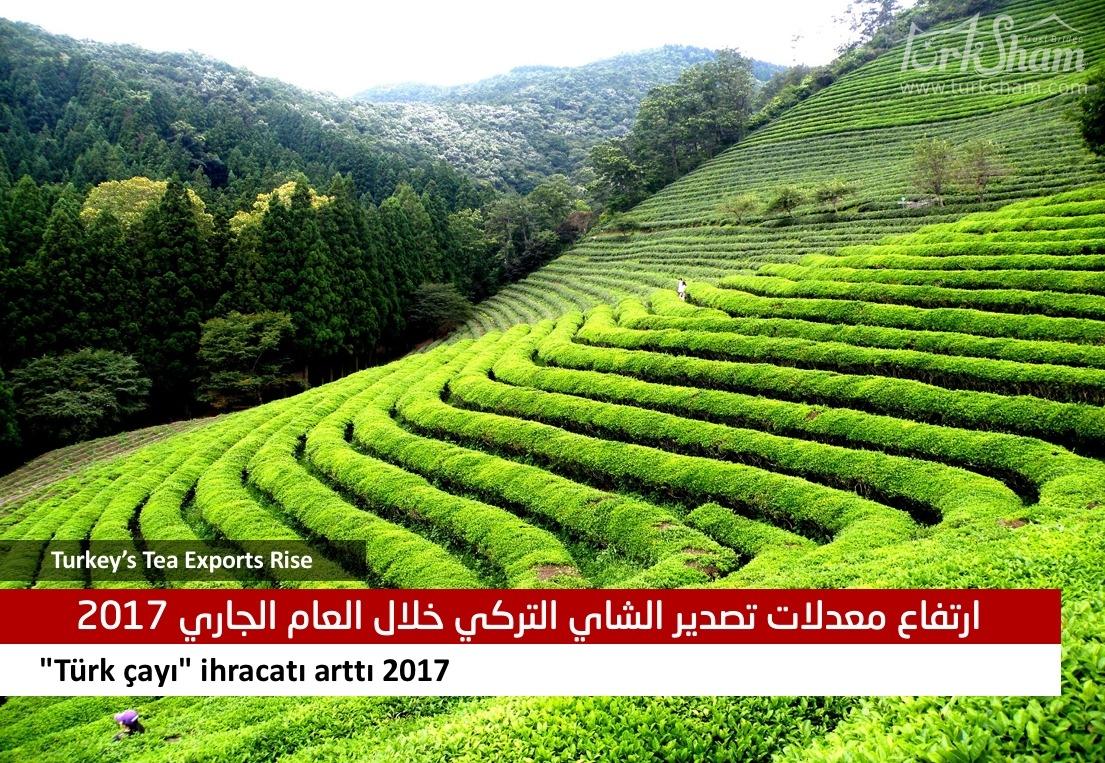 ارتفاع معدلات تصدير الشاي التركي خلال العام الجاري 2017